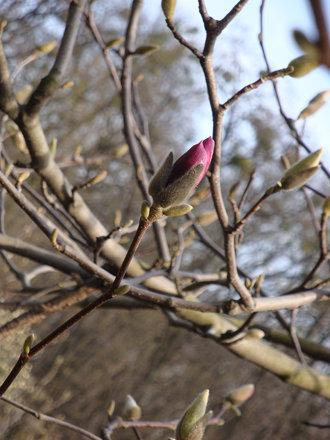 Весна в Києві