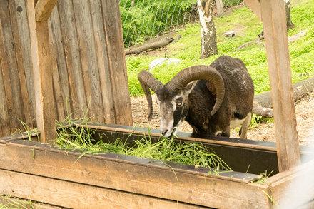 Kitee Zoo
