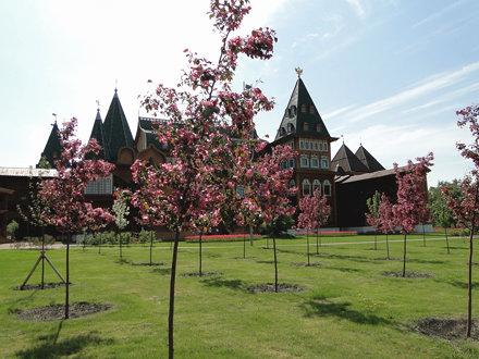 28-21ma11_1254 Kolomenskoye tower blossom spring cherry