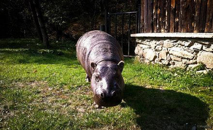 Žofka - KE Zoo