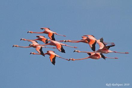 Flamingos de Oviedo