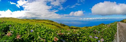 Hortensia and Sao Jorge Island