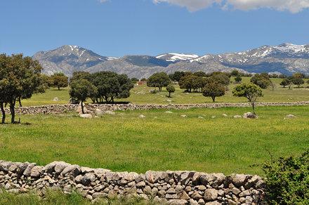 Dehesa castillane près de Colmenar Viejo avec la Sierra de Guadarrama, communauté de Madrid, Castill