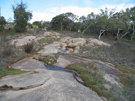 Lesmurdie falls national park    Drosera rosulata habit