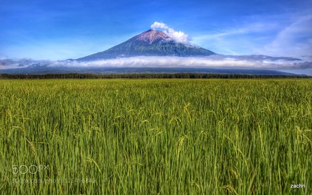 paddy field and the volcano