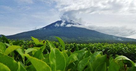 Mount Kerinci  View from The Tea Plantation Below