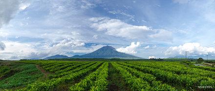 Mount Kerinci from Kayu Aro Tea Plantation 4 - Jambi, Indonesia.jpg