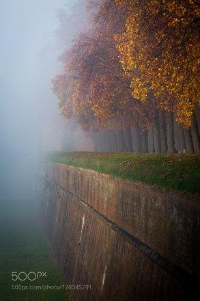 Nebbia sulle mura di Lucca