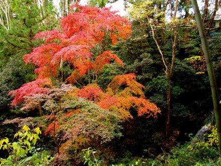長篠城址紅葉20111206