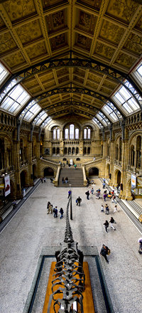 Natural History Museum - main entrance hall - panorama