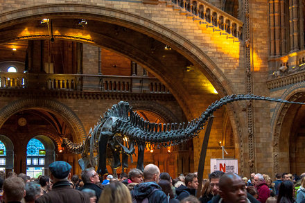 Diplodocus at Natural History Museum, London