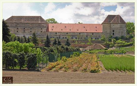 Bio-Feigenhof 1110 Wien: schloss Neugebauede vom energiegarten aus gesehen | 2010-05