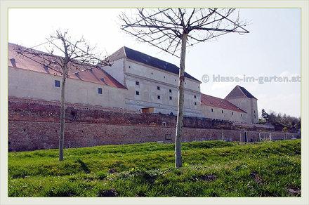 Wien Schloss Neugebaeude - noerdlicher garten, schirmplatanen | 2014-04