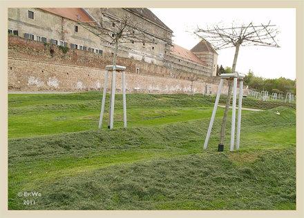 Wien Schloss Neugebaeude - noerdlicher garten, fellwelle wiese 2011-04