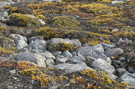 Permafrost patterns of tundra soil, Northeast Greenland National Park