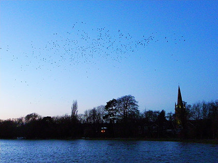 Jackdaws and steeple