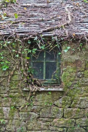 Window at Penjerrick