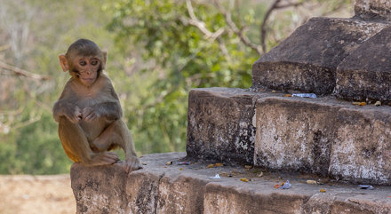 Wild monkeys at Phowintaung cave complex