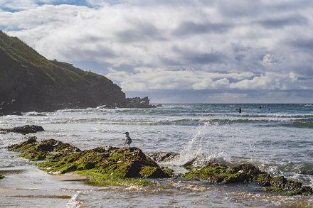 Porth Beach gull + splash