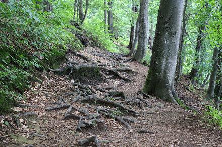 Morské Oko and Primeval forests, Slovakia