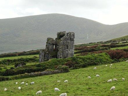 Rahinnane Castle and sheep, Dingle Peninsula
