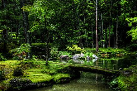 "Zen Garden filled with Moss ""Saiho-Ji"" (Koke-Dera)"