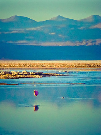 Fauna del Salar de Atacama
