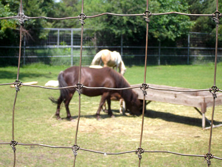 Saskatoon Forestry Farm & Zoo