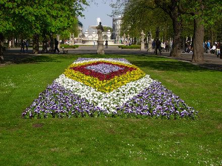 Flowers of Ogrod Saski