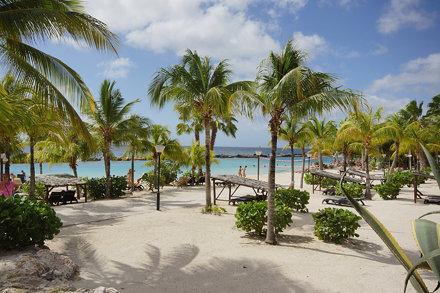 A wonderful beach with palm trees