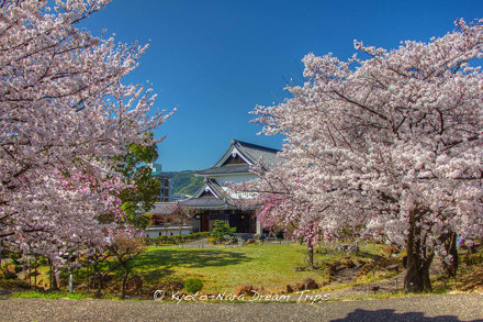 Shōryūji Castle; Sakura Hotspots in Kyoto.