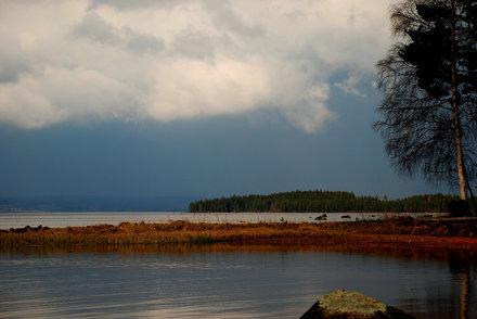 Fine Sweden