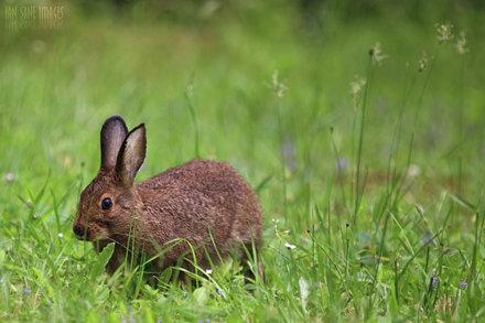 Eye Of Rabbit