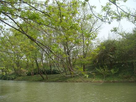 Slender West Lake 16