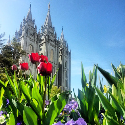 Temple through the tulips. #temple #tulips #saltlakecity