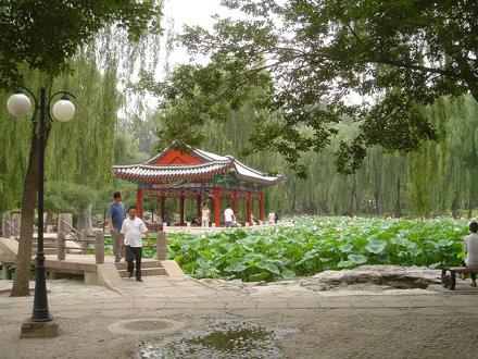 Ritan Park: Lilly Pond