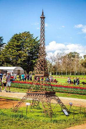 Silvan Tulip Festival-29