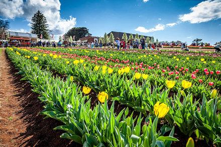 Silvan Tulip Festival-7