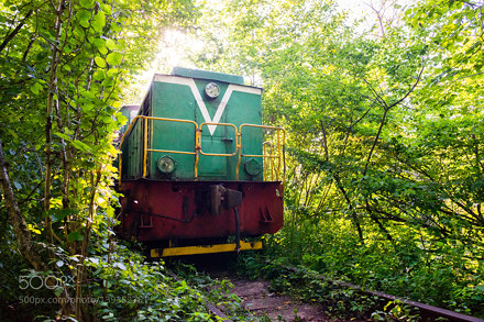 Train going through a natural tunnel of trees near Klevan, Ukraine
