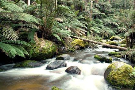 Toorongo River - Noojee, Victoria, Australia