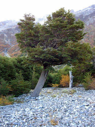 5-Puerto_Natales-93