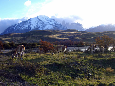 5-Puerto_Natales-32