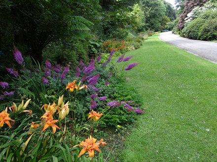 Trengwainton Garden driveway to house, Madron, Penzance, Cornwall.