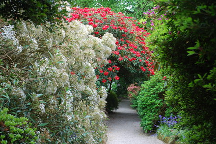 Red & White path