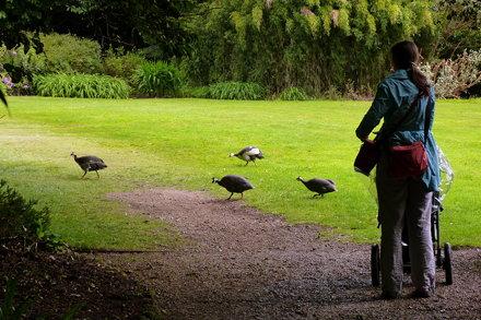 Birds making a getaway