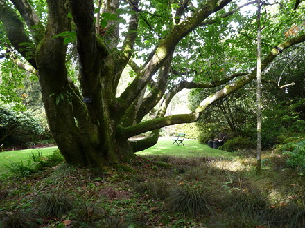 Trengwainton Gardens 01