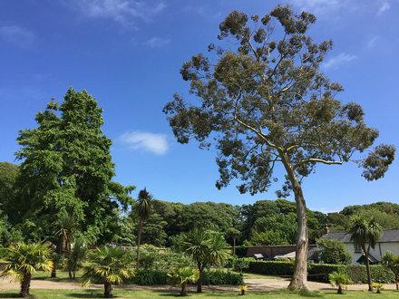 Trengwainton Garden