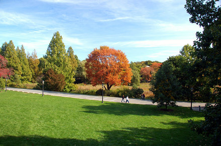 Arnold Arboretum: Colors fall over the trees by the marsh, but the grass is still green