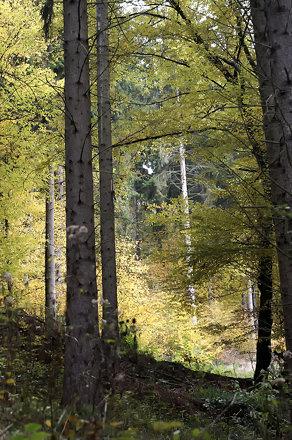 Landschaft-1-1.jpg