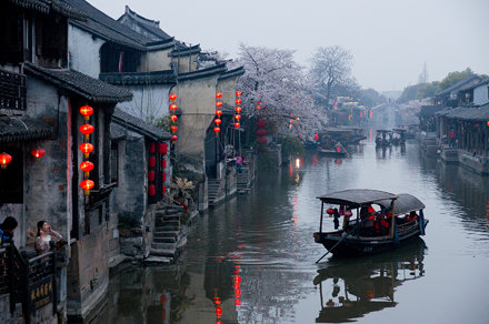 Sakura in Xitang